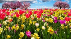 spring-awakening-1197603_1920